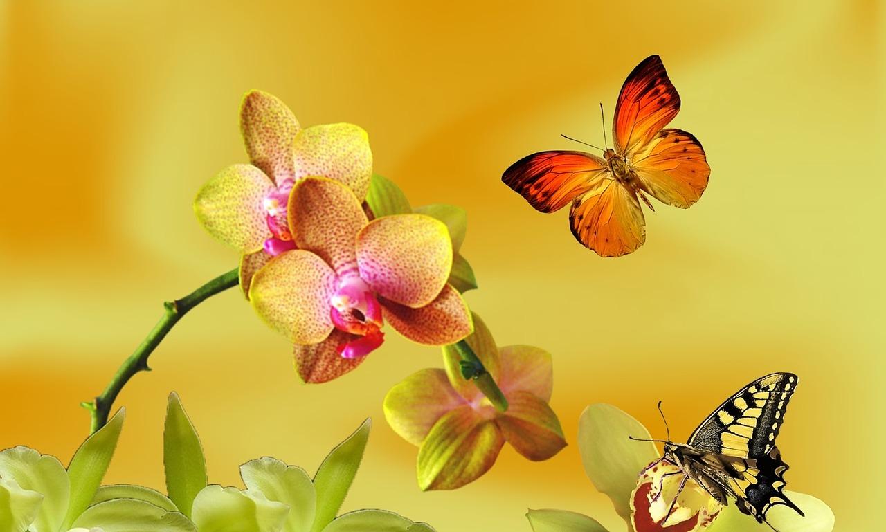 hoa lan vườn babylon