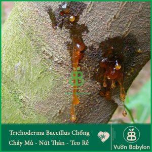 Nấm Đối Kháng Trichoderma Bacillus